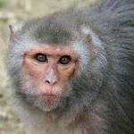 Symbol Addition by Monkeys Provides Evidence for Normalized Quantity Coding
