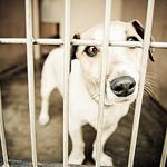 Maddie's Pet Adoption Days Adopter Survey (2013)