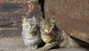 New Survey Reveals Widespread Support for Trap-Neuter-Return