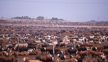 Factory Farms, Visibility, and Disturbing Images