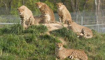 The End of Captive Zoo Breeding