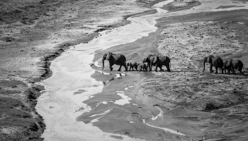 Human Migration And Conservation