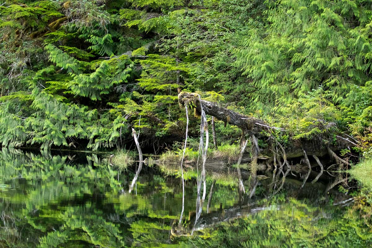 great bear rainforest river landscape