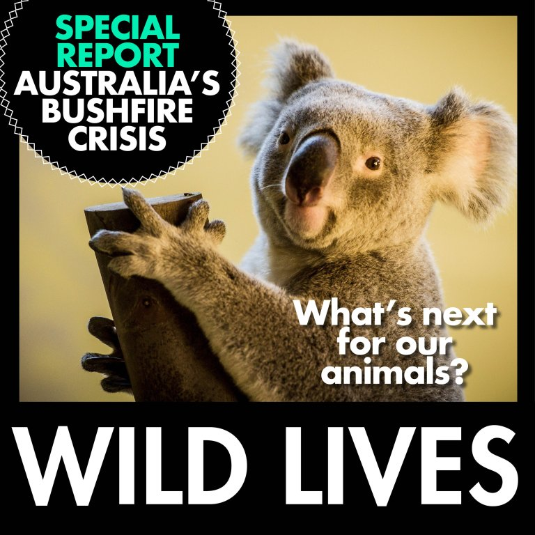 Special report: Australia's bushfires & what's next for our wildlife