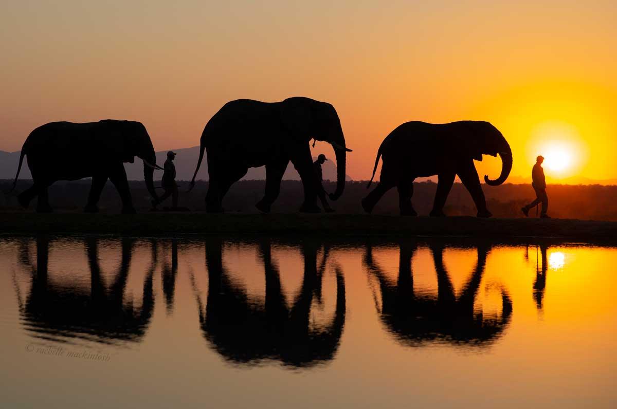 sunset elephants jabulani kapama reserve south africa