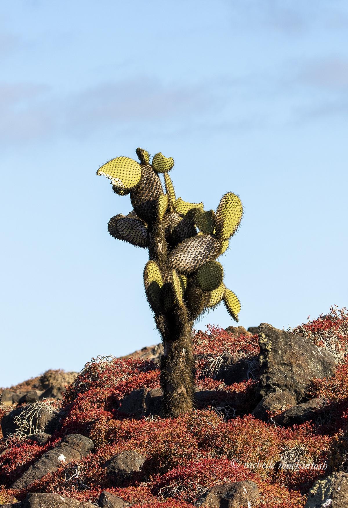 cactus galapagos islands ecuador