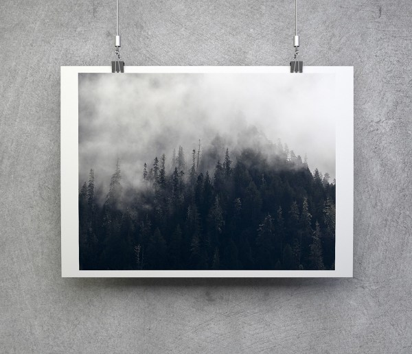 great bear rainforest fine art print