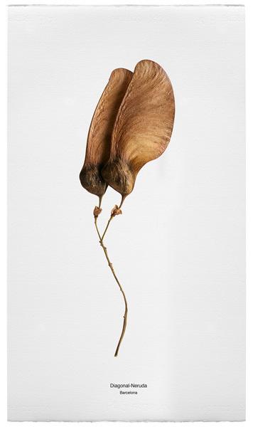 Botánica Urbana, 2001, © Faustí LLucià, Impresión en papel Fabriano 380 gr. 40x70 cm.