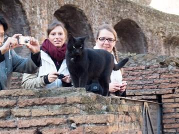 Il gatto nero was the star of the arena that day.
