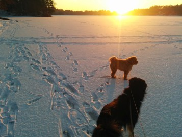 Sam and Chewie *on* the lake at sunrise. / Nexus 5