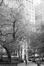 """Madison Square"" Leica M-P, Summilux 50mm"