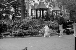 """Squirrel"" Leica M-P, Summilux 50mm"