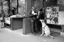 """Begging"" Leica M-P, Summilux 50mm"