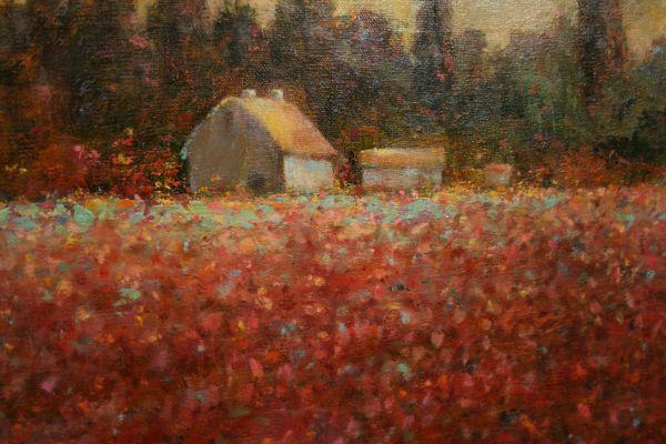 (Close-up) Tulip Farm by Sue Bennett