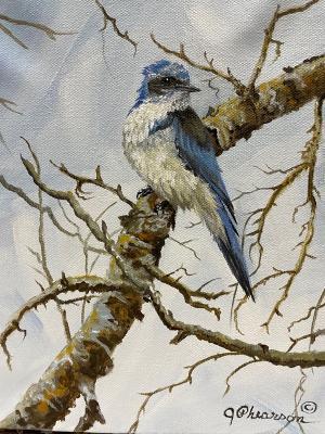 Mountain Blue Bird by Judy Phearson