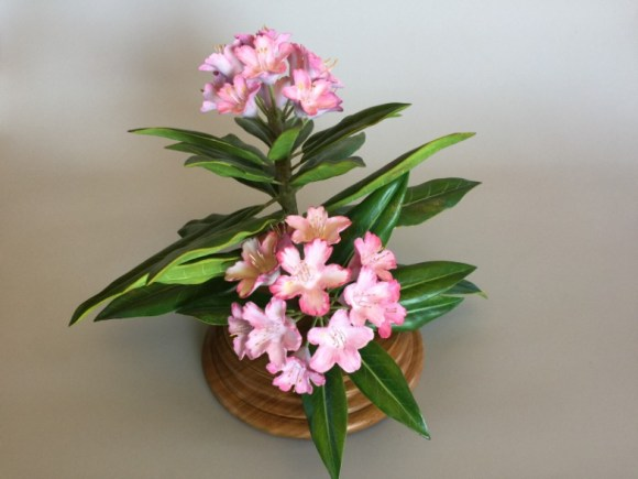 Rhododendron by Mark Holland and Cindy Lewis