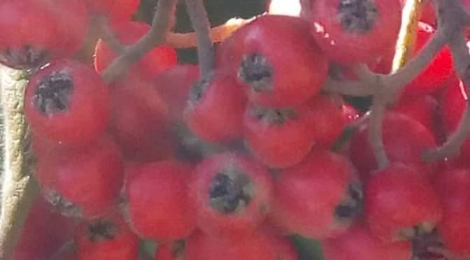 I frutti della natura