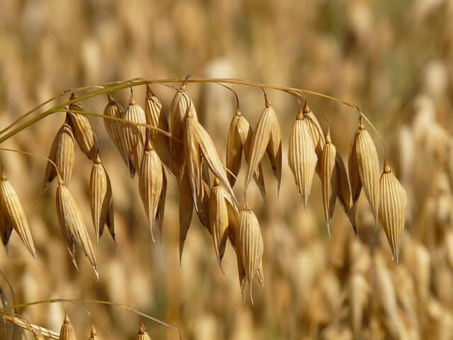 今日知ったこと「キーマカレーは丸大食品に限る」「もち麦が凄い」