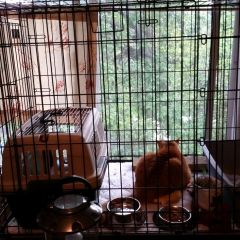 Transitioning Outdoor Cat to Indoor Cat – Story of Ornji
