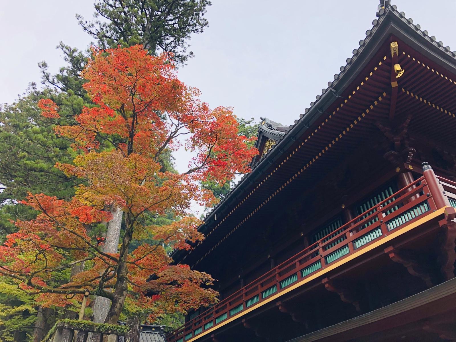 世界遺産「日光の社寺」!神橋から輪王寺へぶらり散策
