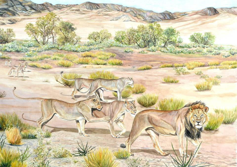 'Kgalagadi Pride' - a pride of lions painted in watercolour by Somerset artist, Faye Edmondson
