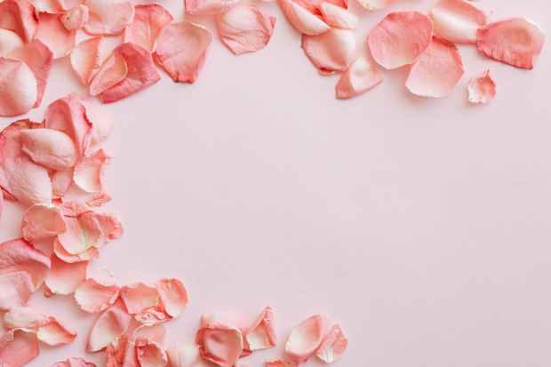 background with round frame made of pink rose petals
