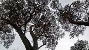 Tree tops fay johnstone
