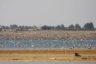 Flamingo_Fayoum_Egypt (23)