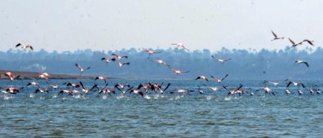Flamingo_Fayoum_Egypt (26)
