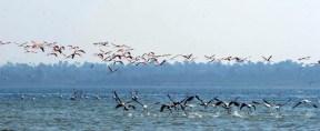 Flamingo_Fayoum_Egypt (34)