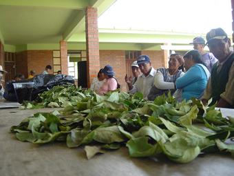 Cocaleros reunidos no interior de La Paz.