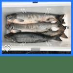 鮭はしばらく要りません…20190914-15