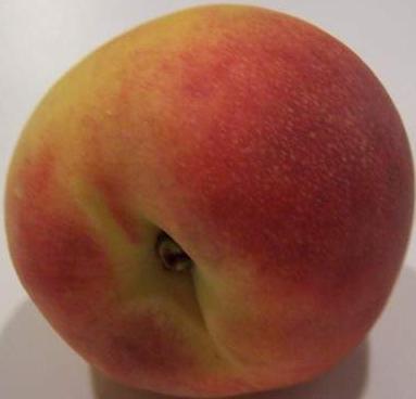 Посадка персиков осенью