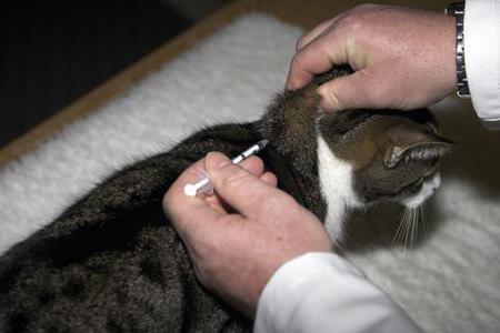 Анафилактический шок у кошек причины и последствия