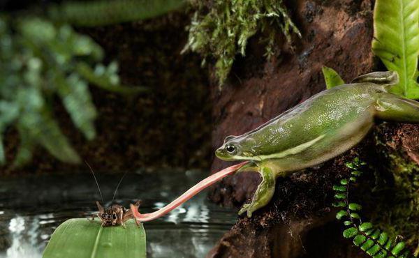 trăsături ale vederii la amfibieni