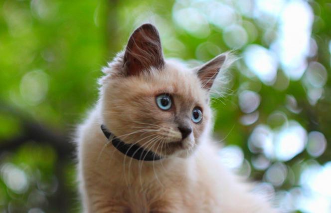Черепно-мозговая травма у котенка
