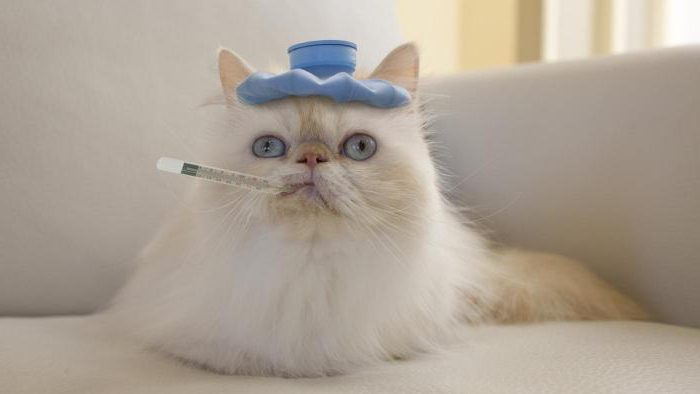 У кошки холодные лапы выявляем причины и предотвращаем последствия