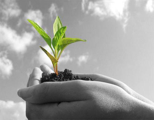 Земля под развитие ЛПХ: как взять в аренду, и чем это лучше фермерства. Чем отличаются земли СНТ от ИЖС и ЛПХ и что лучше выбрать из них землепользователю? Выделение земли под лпх
