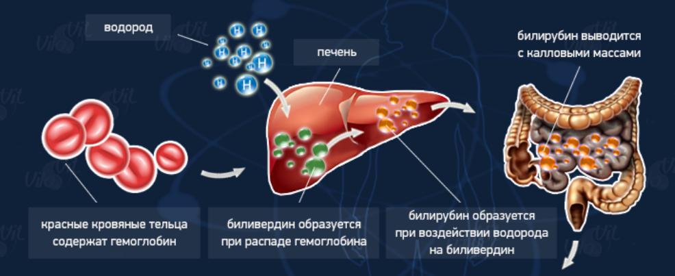 повышенный билирубин какая диета