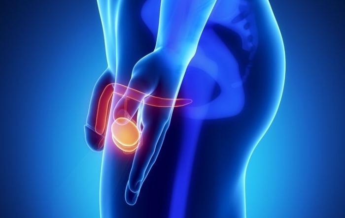ligamentotomia penisului care este durata unei erecții