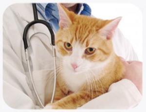 Почему появляется кровь в кале у кошки: причины, сопутствующие заболевания. Если обнаружилась кровь в кале у кошки, что делать? - Автор Екатерина Данилова