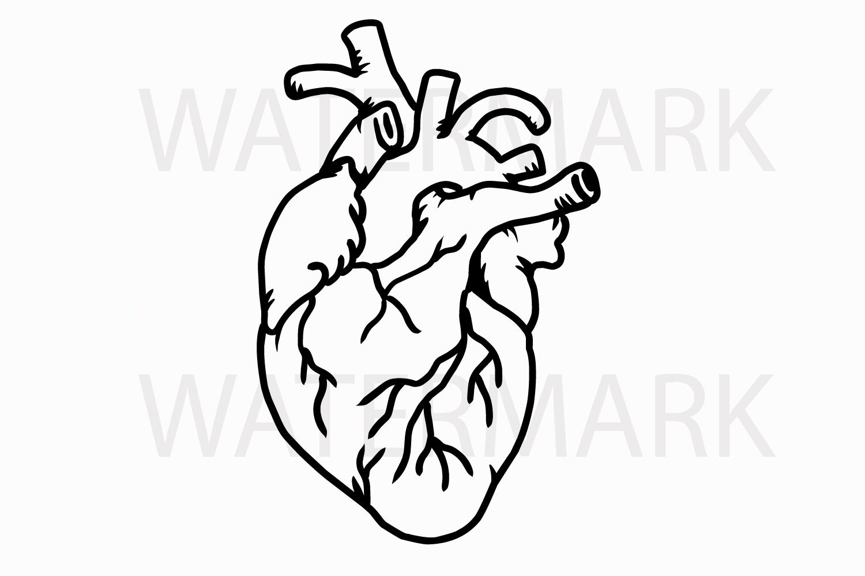 Human Real Heart