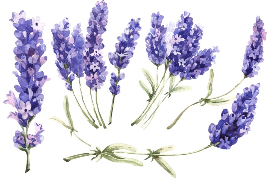 Lavender PNG flowers in watercolor by M   Design Bundles Lavender PNG flowers in watercolor example image 4