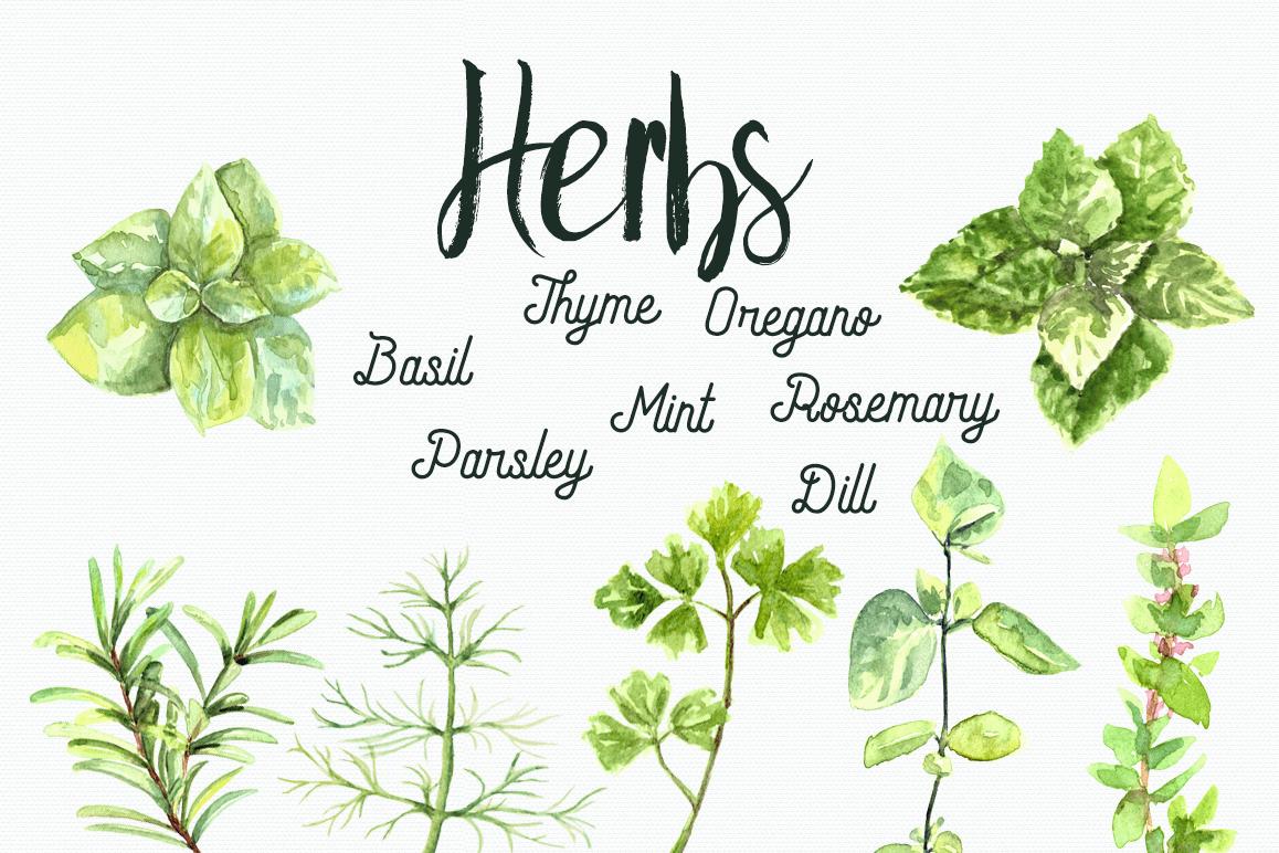 Watercolor Herbs Clip Art Set