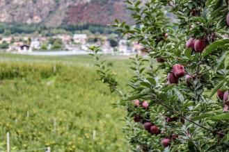 170901-125359-apple-IMG_4205