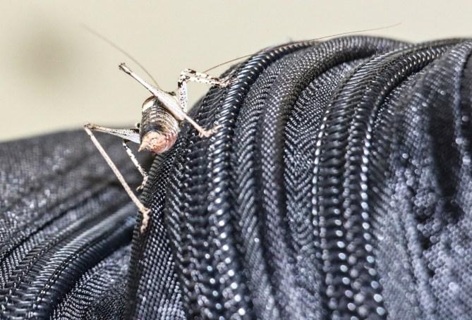 170902-092049-insekt-IMG_4370