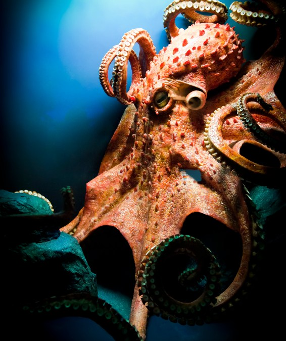 Octopuses are awesome. See why …