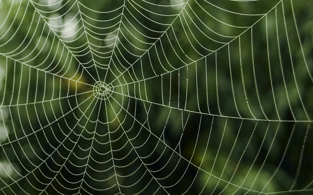 Spider webs inspiring new science