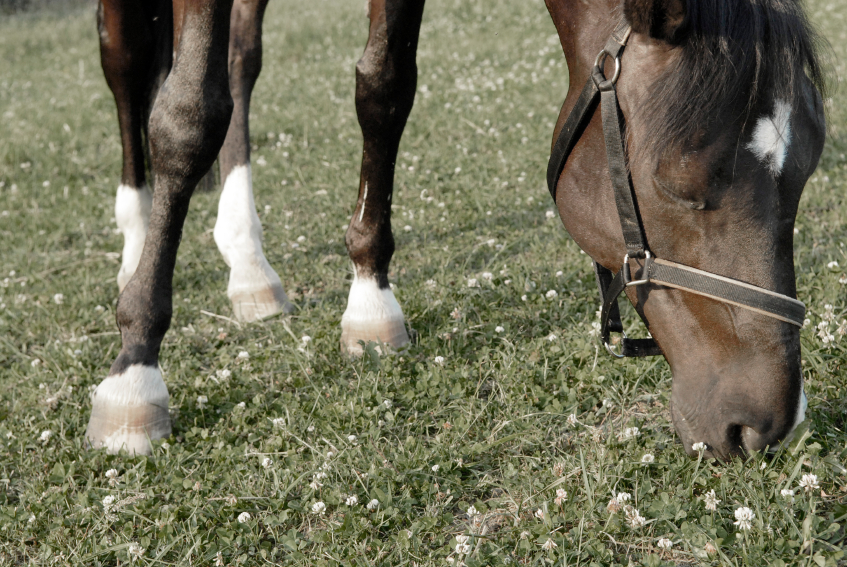 Coconut and onion could be natural horse dewormers