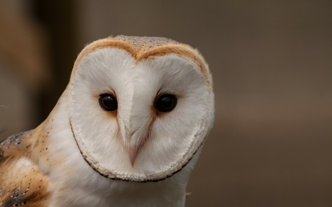 Attention: Bats and Owls offer insights